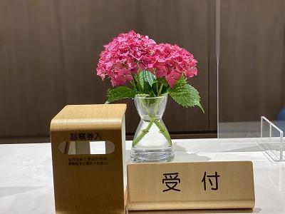 受付に紫陽花
